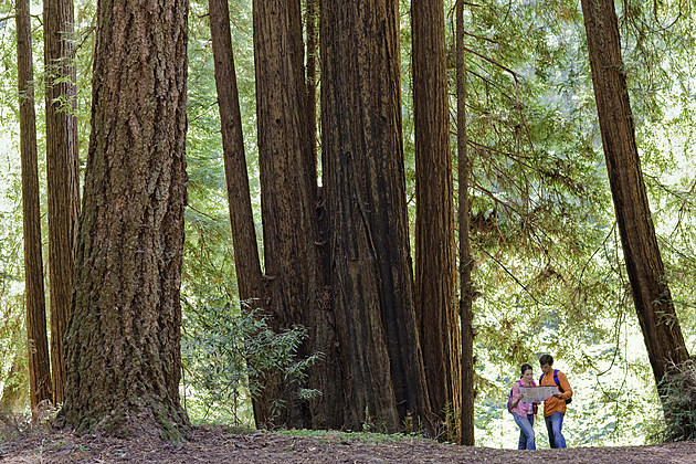 Couple in forest preserve with redwoods, Felton, California